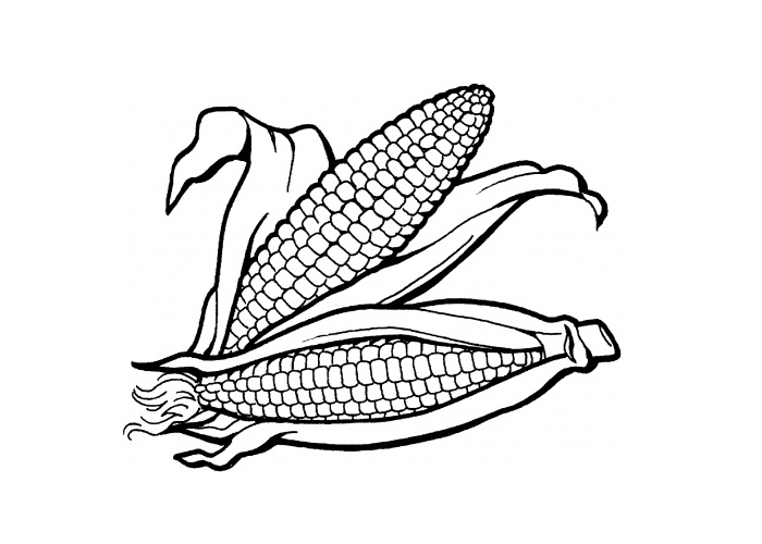 Free Corn On The Cob Coloring Pages Coloring Pages